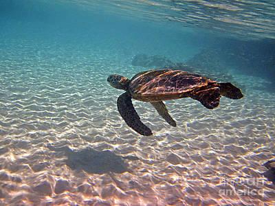 Hawaiian Honu Photograph - Sea Turtle Shadow On Sand by Bette Phelan