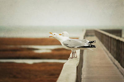 The Edge Photograph - Seagul by Lucy Loomis, Photographer