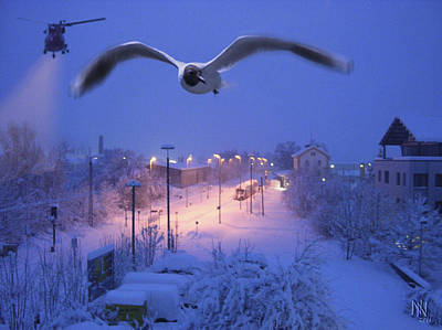 Seagull At Winter Print by Nafets Nuarb
