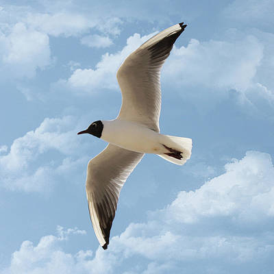 Flying Seagull Photograph - Seagull Flies Alone Under Blue Sky And Cloud by Margarete Nazarczuk