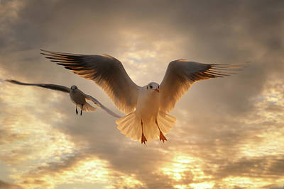 Flying Animals Photograph - Seagull by GilG Photographie