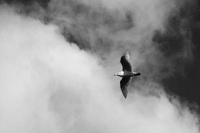 Seagull In The Clouds Print by Twenty Two North Photography