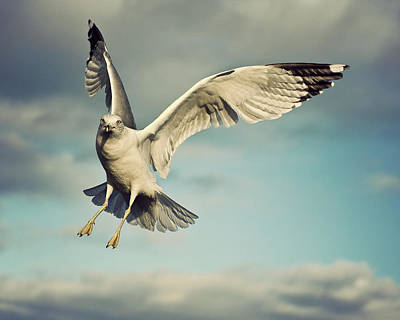Flying Seagull Photograph - Seagull by Jody Trappe Photography