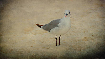 Gull Print by Sandy Keeton