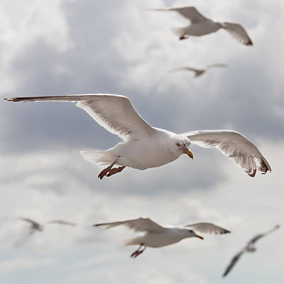 Flying Seagull Photograph - Seagulls by Diegorivera