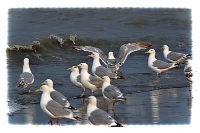 Birds Photograph - Seagulls Gathering by Debra  Miller