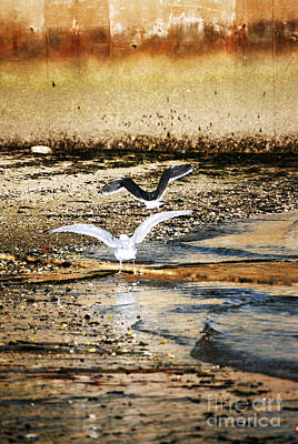 Flying Seagull Photograph - Seagulls by HD Connelly