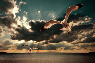 Flying Seagull Photograph - Seagulls In A Grunge Style by Meirion Matthias