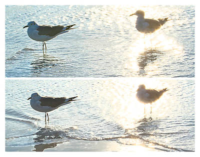 Seagulls In A Shimmer Two Views By Olivia Novak Print by Olivia Novak