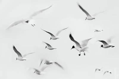 Flying Seagull Photograph - Seagulls by K.Arran - photomuso