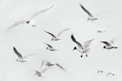Of Birds Photograph - Seagulls by K.Arran - photomuso