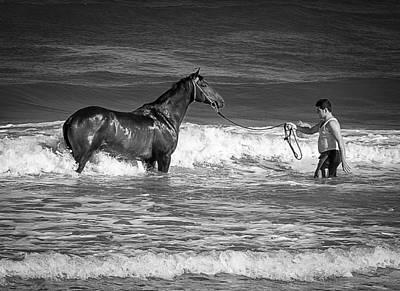 Seahorse  Print by Michael Avory