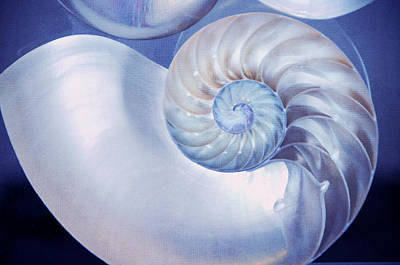 Seashell. Blue Version  Print by Jenny Rainbow
