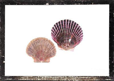 Seashells D Print by Marsha Heiken