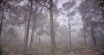 Secret Of The Misty Forest Print by Guido Montanes Castillo