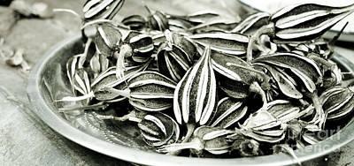 Seedpods Print by Nicole Neuefeind