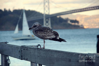 Seegull At The Bay Bridge San Francisco Print by Design Remix
