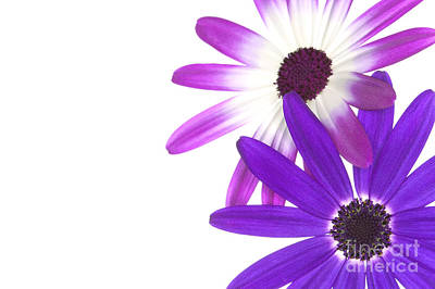 Senetti's  Print by Richard Thomas