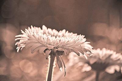 Bokeh Photograph - Sepia Sweetness by Trish Tritz