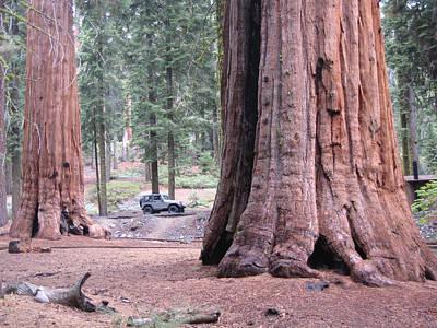 Sequoia Photograph - Sequoia  Trees 2 by Naxart Studio