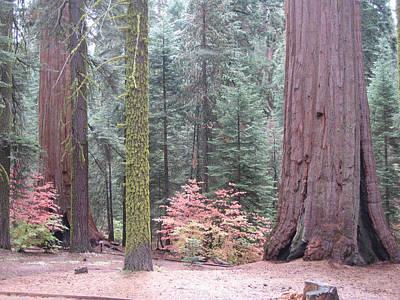 Sequoia Photograph - Sequoia  Trees  by Naxart Studio