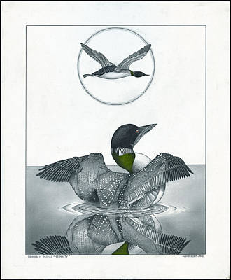 Loon Drawing - Serenity by Bryan Austerberry