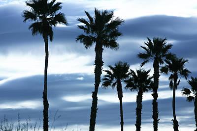 Seven Palms Print by Gilbert Artiaga