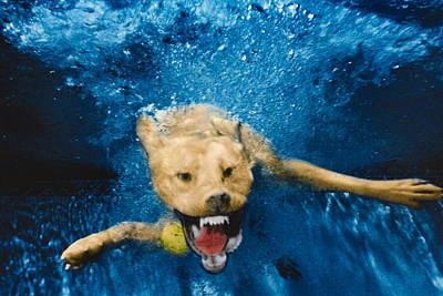Diving Dog Photograph - Shark Attack by Jill Reger