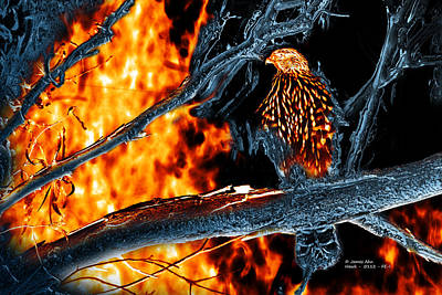 Sharp Shinned Hawk 0112 Fire And Ice Art Print by James Ahn