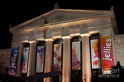Shedd Aquarium With Jellyfish Exhibit Print by Paul Velgos