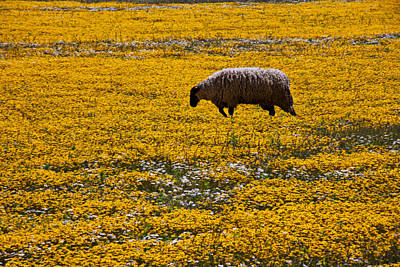 Sheep In Meadow Of Golden Flowers Print by Garry Gay