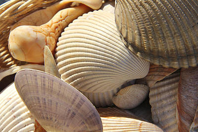 Sea Shells Digital Art - Shells 1 by Mike McGlothlen