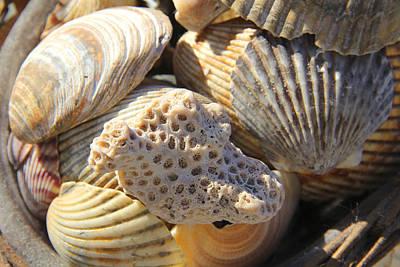 Sea Shells Digital Art - Shells 3 by Mike McGlothlen