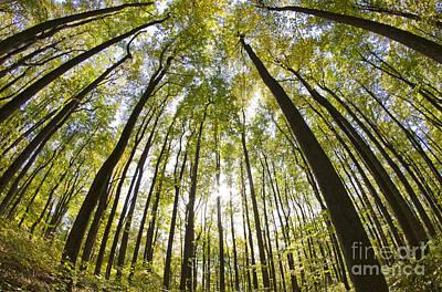 Virginia Photograph - Shenandoah National Forest Va by Dustin K Ryan