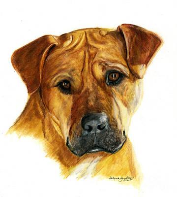 Boxer Dog Art Drawing - Sherman by Deb Gardner