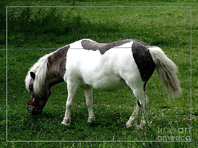 Animal Photograph - Shetland Pony With Watercolor Effect by Rose Santuci-Sofranko
