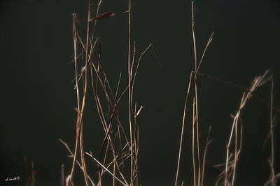Indiana Rivers Photograph - Shhhhhh by Ed Smith