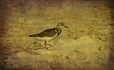Shore Bird Print by Sandy Keeton