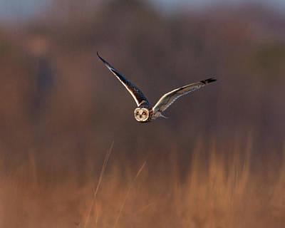 Owl Photograph - Short-eared Owl by Photo by DCDavis