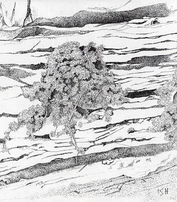 Shrub In Sedimentary Rock Print by Inger Hutton