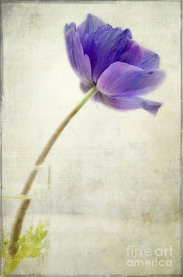 Shy Anemone Print by Marion Galt