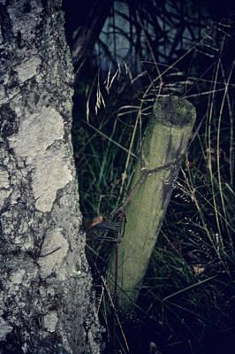 Birch Bark Photograph - Sidetracked by Odd Jeppesen
