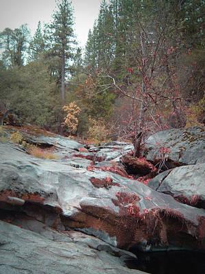 Sierra Nevada Photograph - Sierra Nevada Forest 1 by Naxart Studio
