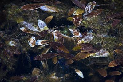 Silent Fall Print by Ron Jones