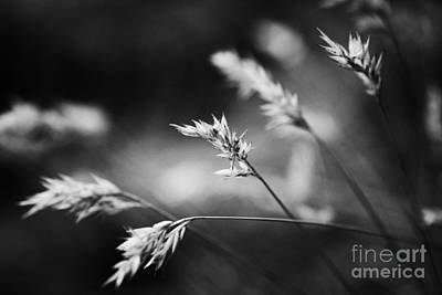 Wayside Photograph - Silently - Black And White by Hideaki Sakurai