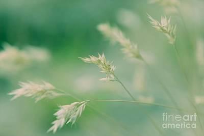 Wayside Photograph - Silently - Colour by Hideaki Sakurai