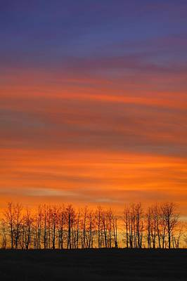 Silhouette Of Trees Against Sunset Print by Don Hammond