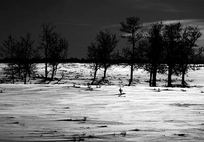 Simple Trees Print by JC Photography and Art
