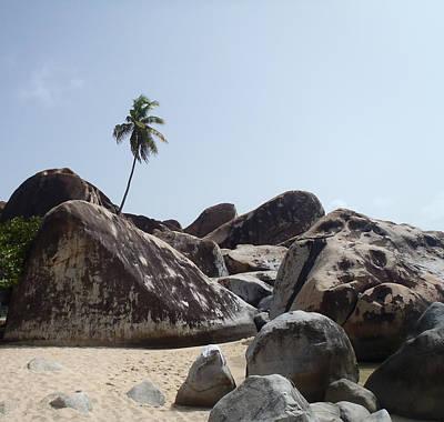Photograph - Single Palm Tree On Tropical Island by