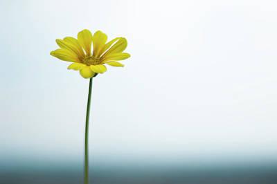 Single Yellow Daisy On Sky And Sea Print by Alexandre Fundone